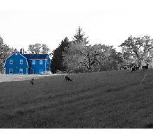 Blue House Photographic Print
