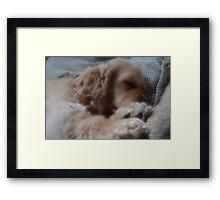 Let Sleeping Dogs Lie Framed Print