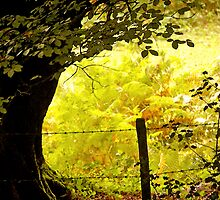 A Warm October  by Mike  Waldron
