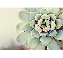 Succulent Flower Photographic Print