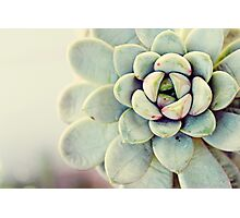 Succulent Flower Photographic Print