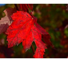 Red Badge of Courage Photographic Print