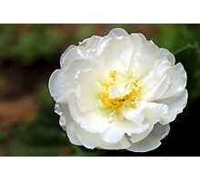 White Flower Photographic Print