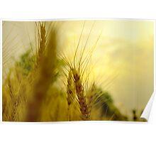 Crop Poster