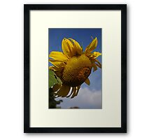 A Bright Spot on a Dull Day Framed Print