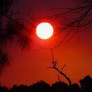Sunset by photoj