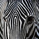 african stripes by Jo-PinX