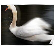 swan 8 Poster