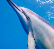 Dolphin Iphone by Kana Photography