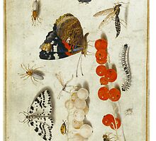 Jan van Kessell by anni103