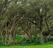 paperbark swamp with lily infestation by metriognome