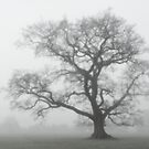 Mist-tree by Goldendays