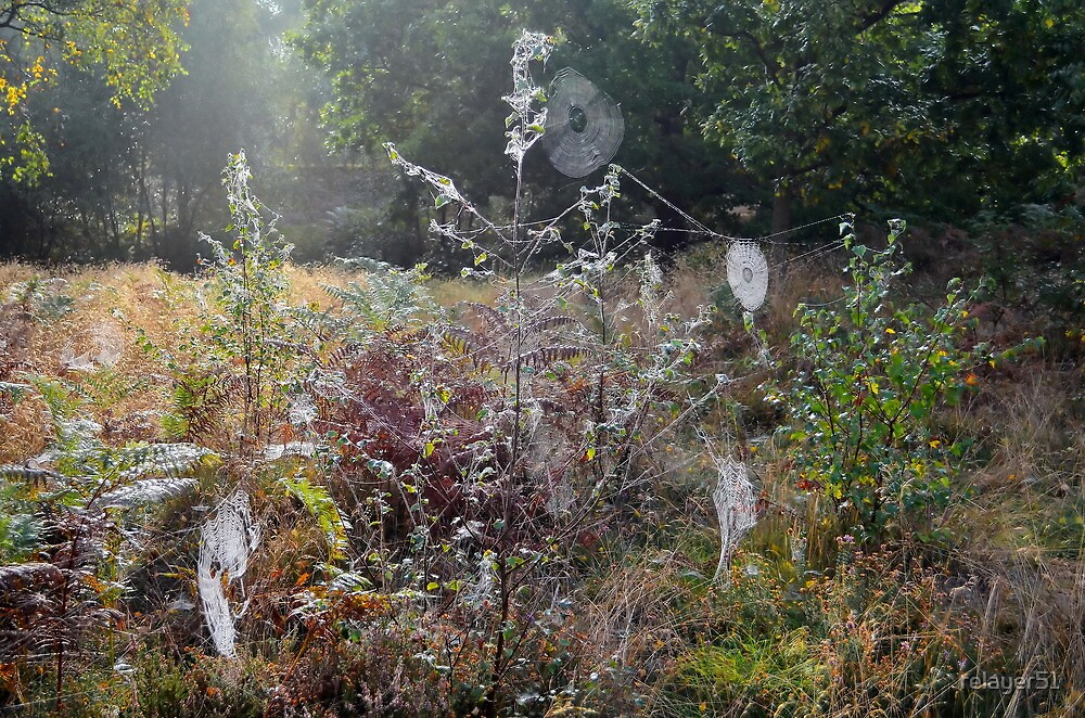 Spider Webs in the Morning Sun by relayer51
