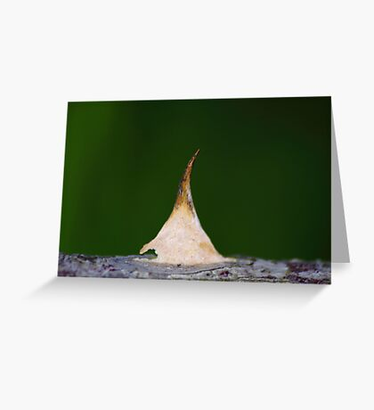 Tiptoe tepee Greeting Card