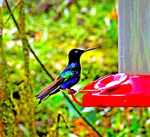 Mindo Hummingbird Poster by Al Bourassa