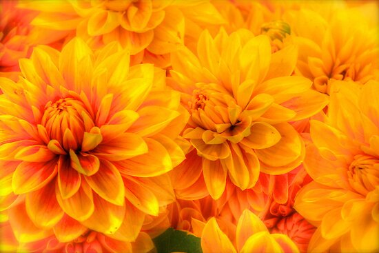 Well, Yellow to You! by Sue Morgan