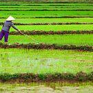A Woman Transplants Rice Seedlings, in Phong Nha, Quang Binh, Vietnam (2013) by Zati