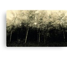 Poplar Trees # 2 Canvas Print