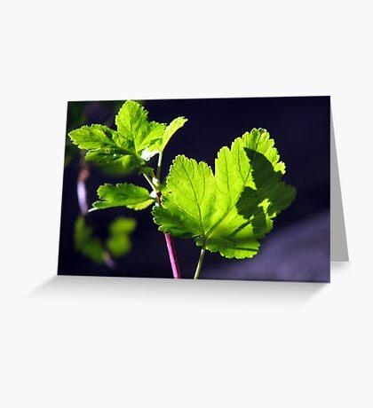 Shadow of a Torn Leaf Greeting Card