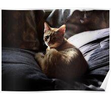Kitty Cat Nap Poster