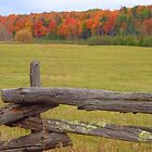 Ontario Autumn #3 by goddarb