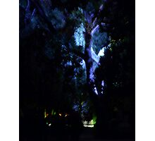 Blue Tree Photographic Print