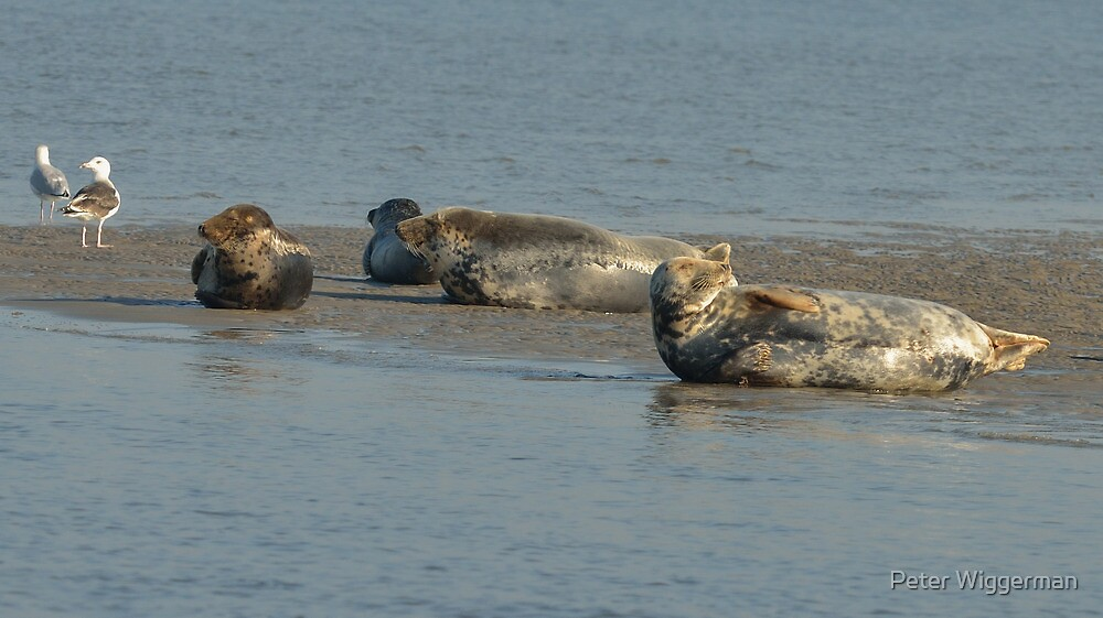 Seals - II by Peter Wiggerman