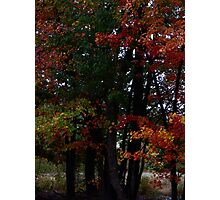 Autumn Foliage 2013 #9030 Photographic Print