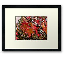 Tow By Two ~ Leaves Fall Colors ~ Framed Print