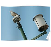 pigeon on lamp Poster