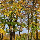 Autumn colours by Aase