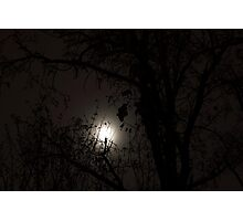 Moon behind the trees Photographic Print