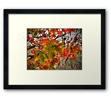 It Is That Time ~ Leaves Fall Colors ~ Framed Print