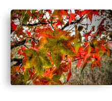 It Is That Time ~ Leaves Fall Colors ~ Canvas Print