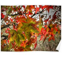 It Is That Time ~ Leaves Fall Colors ~ Poster