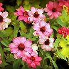 Fading Zinnias by Linda  Makiej