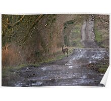 Roe Deer on the Roman Road Poster