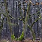 Forked Tree by WhyteAugust