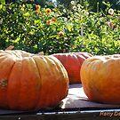 Home grown pumpkins by Rainydayphotos