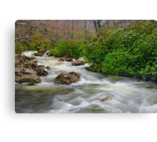 Spring Brook Canvas Print