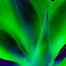 Agave by Thomas Barker-Detwiler