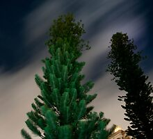 Trees at Night by Jacki Campany