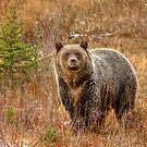 Good looking Grizzly by JamesA1