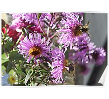 Two Busy Bees on Violet Flowers Poster