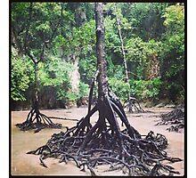 cool tree bro Photographic Print