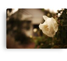 Rose at home Canvas Print