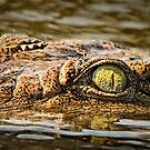 Crocodile Eye and Damselfly by Peter O'Hara