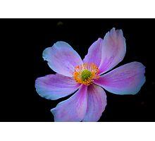 Japanese Anemone 2 Photographic Print