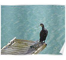 Cormorant on Dock Poster