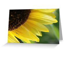 Regent Sunflower Greeting Card